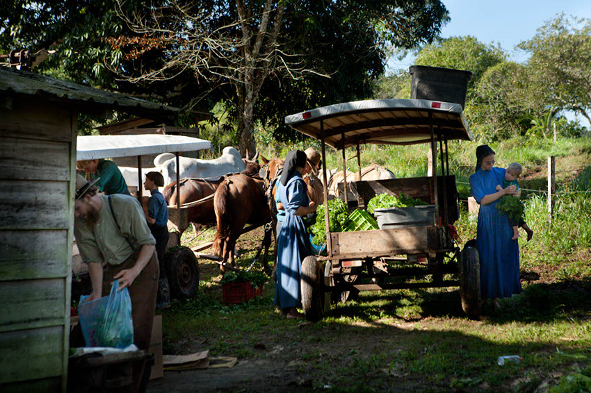 Belize: Mennonites market, Photo: Thomas Alboth
